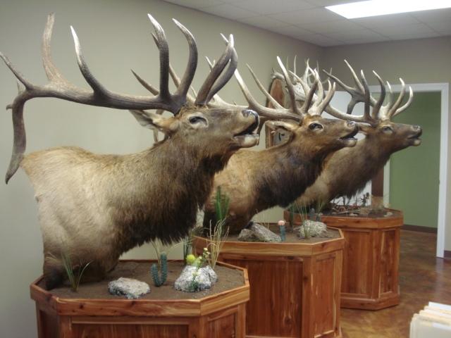 Elk mount fireplace - photo#25